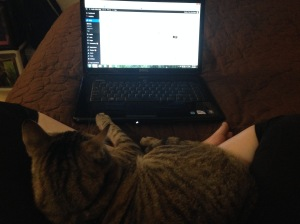 cat in a lap looking at laptop