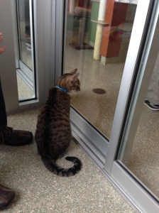 a cat in an animal shelter