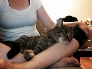 a cat on a woman's lap