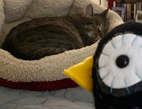 Cat and stuffed penguin
