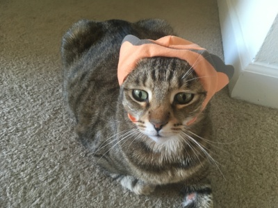 cat-wearing-a-hat