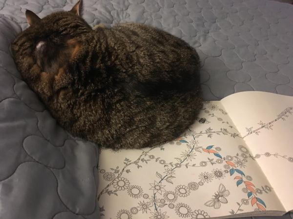 cat and coloring book